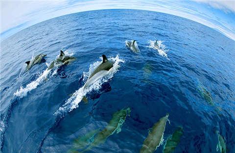 海洋动物保护海报